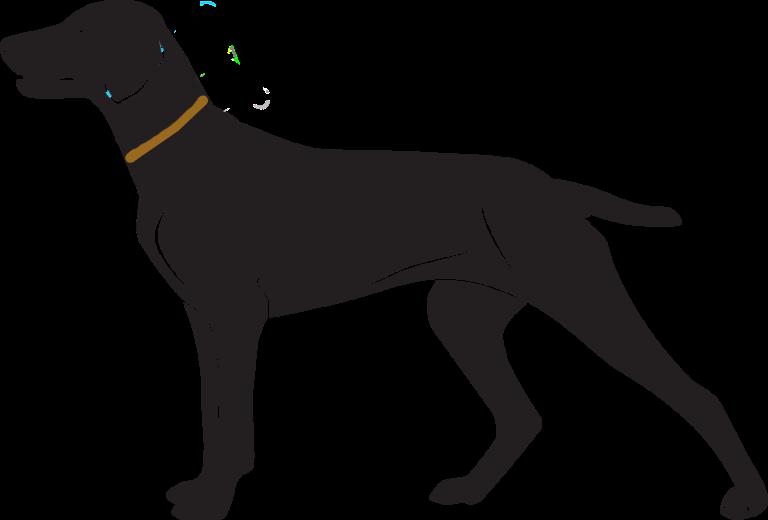 Jak správně změřit obvod krku vašeho psa